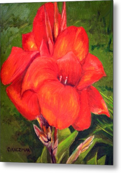 Presidential Canna Metal Print by Olga Kaczmar