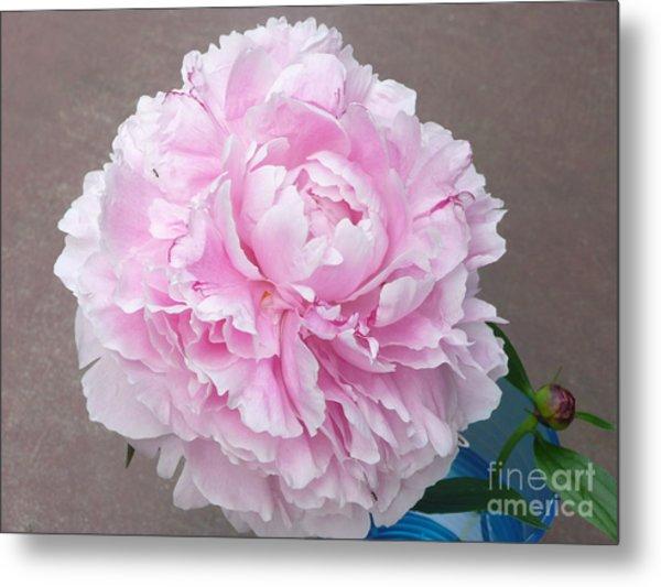 Pretty And Pink Metal Print by Barb Montanye Meseroll