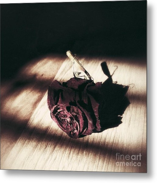 Pretty Dead Rose Resting In The Warm Sun Metal Print