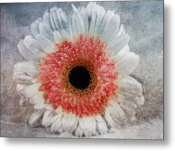Pretty Gerbera Macro Metal Print by Georgiana Romanovna