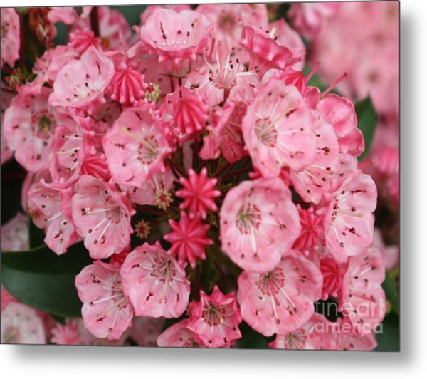 Pretty In Pink Metal Print by Amy Holmes