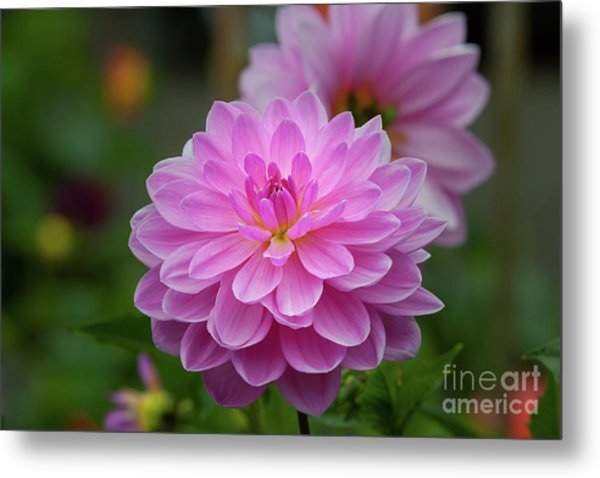 Pretty In Pink 1 Metal Print