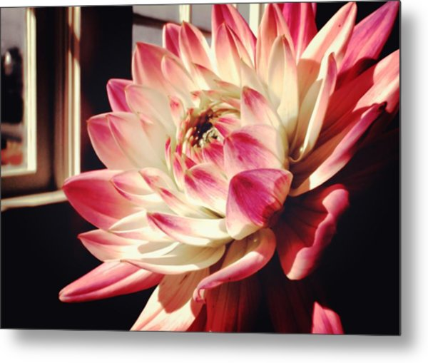 Pretty Pink Metal Print by JAMART Photography