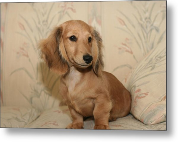 Pretty Pup Metal Print