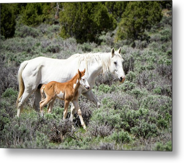Metal Print featuring the photograph Pretty White Mustang Mare With Her New Foal - Sand  Wash Basin by Nadja Rider