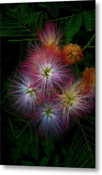 Prickly Flower Metal Print by Christopher Lugenbeal