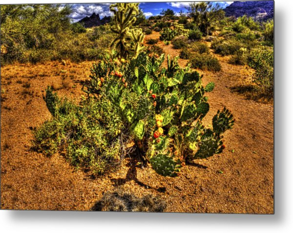 Prickly Pear In Bloom With Brittlebush And Cholla For Company Metal Print