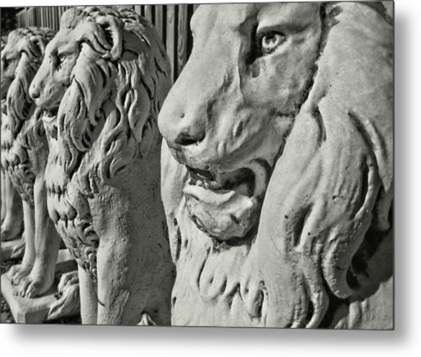 Pride Of Lions Metal Print by JAMART Photography
