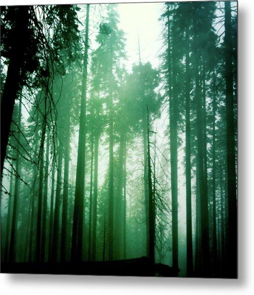 Primeval Forest Metal Print
