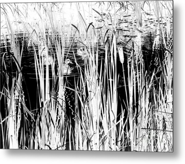 Private Duck Swimming Hole 2 In Black And White Metal Print by Elizabeth Ann  Roy