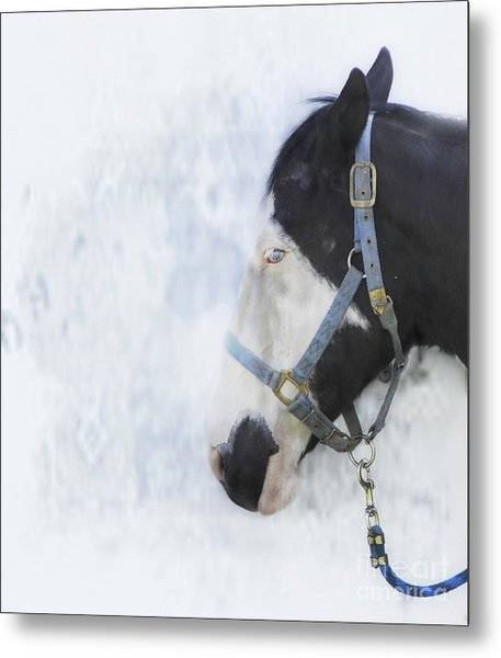 Profile In Horse  Metal Print by Steven Digman
