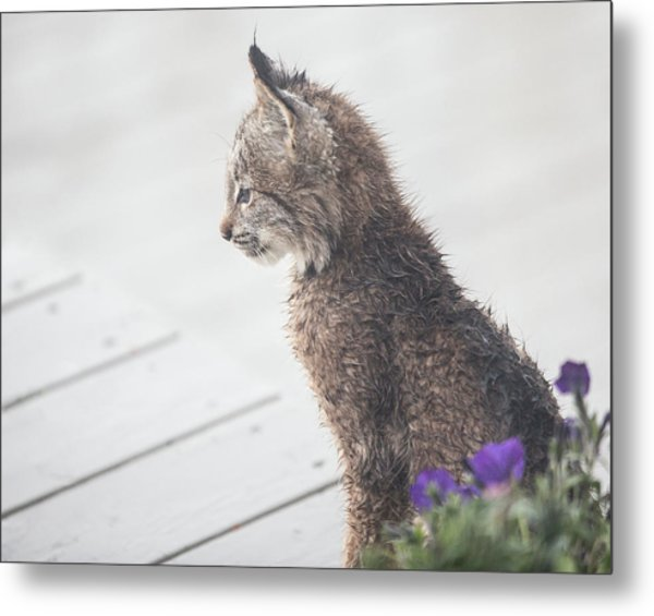 Metal Print featuring the photograph Profile In Kitten by Tim Newton