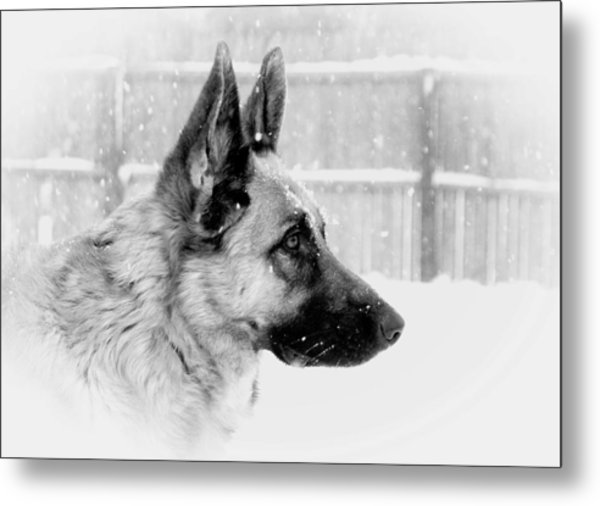 Profile Of A German Shepherd Metal Print