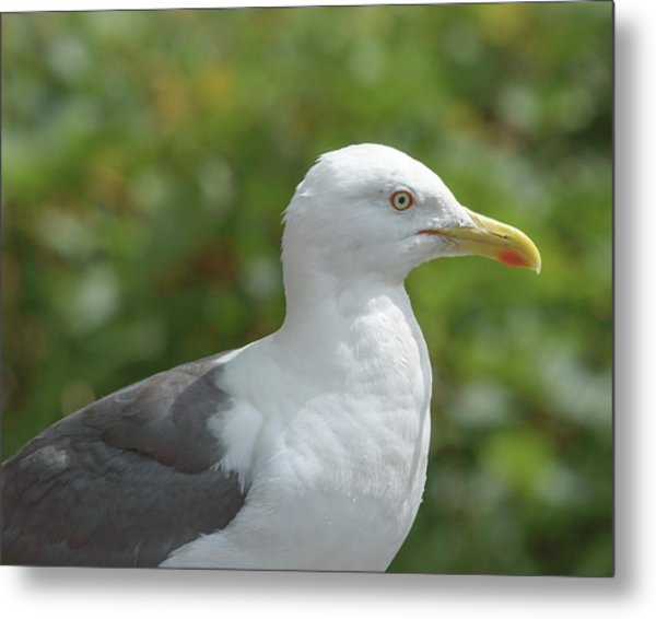 Metal Print featuring the photograph Profile Of Adult Seagull by Jacek Wojnarowski