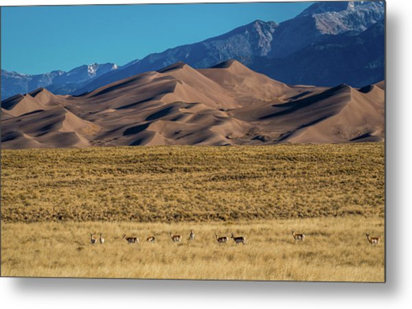 Pronghorn Sunrise Metal Print