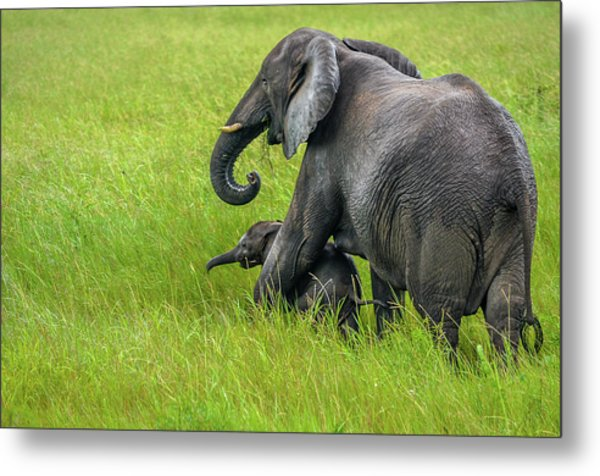 Protective Elephant Mom Metal Print