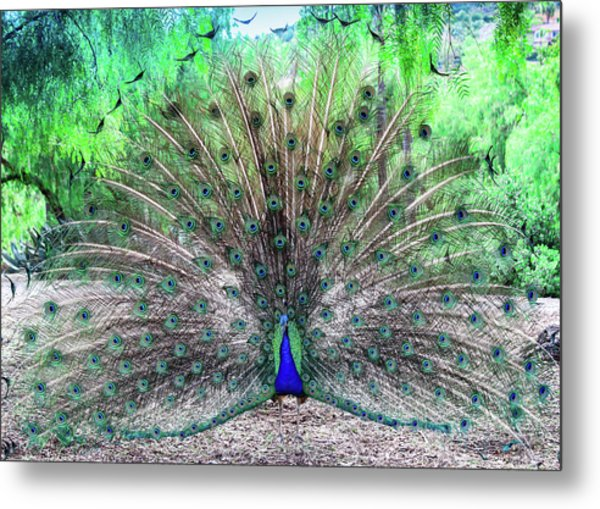 Metal Print featuring the photograph Proud by Alison Frank