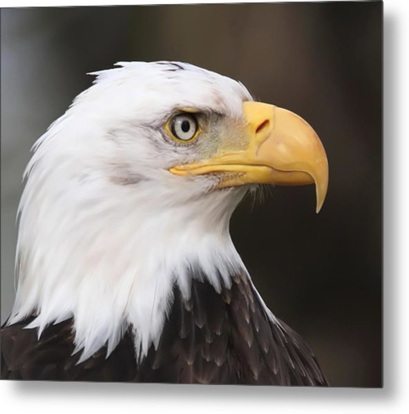 Proud Eagle Metal Print