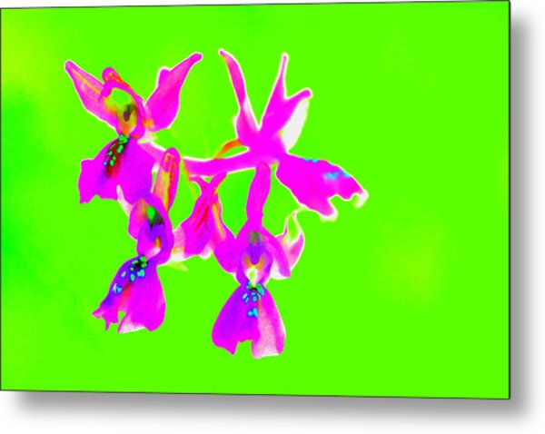 Green Provence Orchid  Metal Print