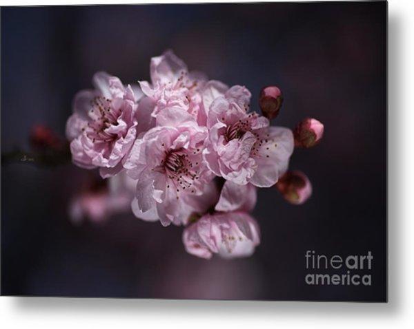 Prunus A Pink Spring Metal Print