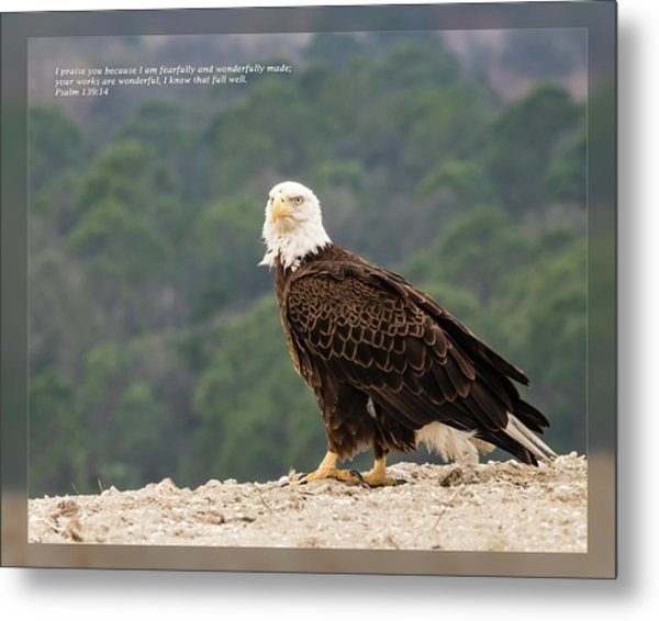 Metal Print featuring the photograph Psalm 139 14 by Dawn Currie