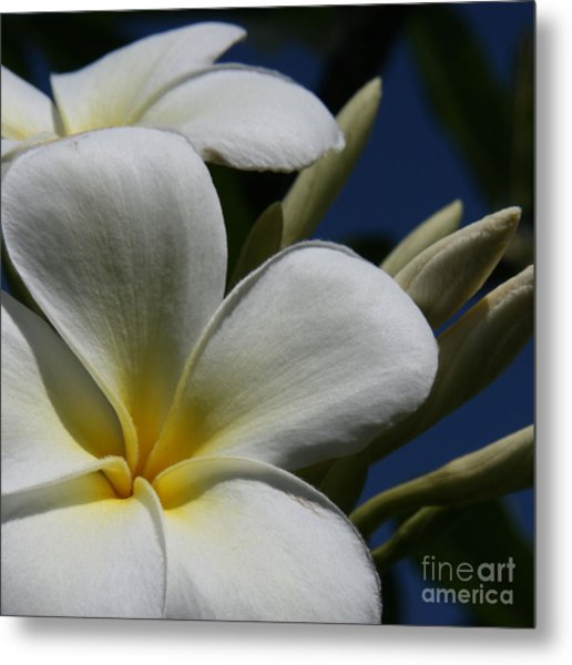 Pua Lena Pua Lei Aloha Tropical Plumeria Maui Hawaii Metal Print