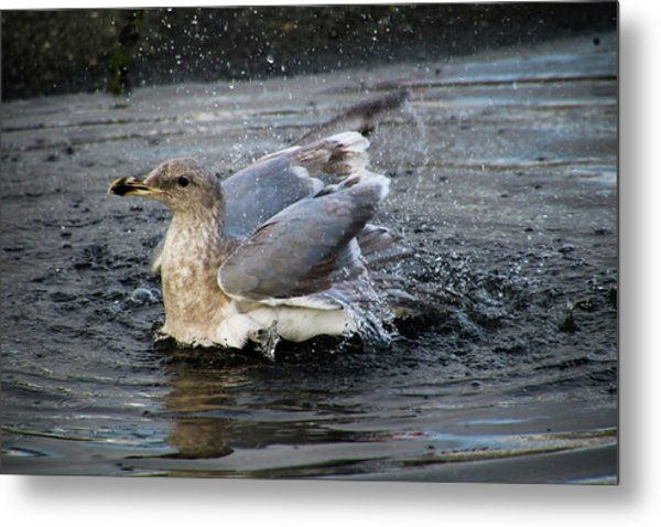 Puddle Bath Metal Print