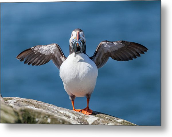Puffin With Fish For Tea Metal Print