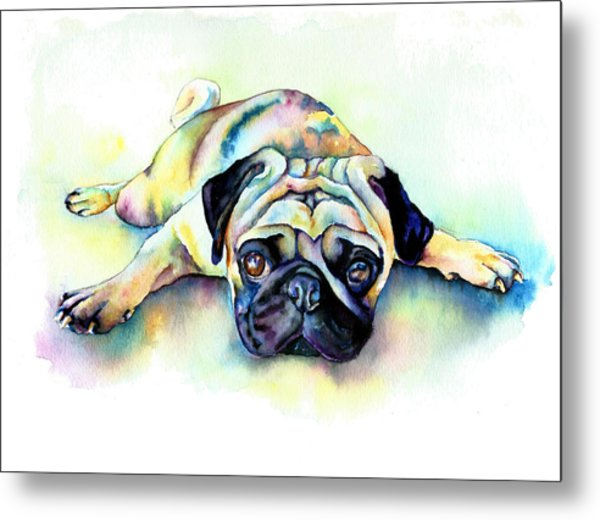 Pug Laying Flat Metal Print