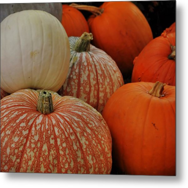 Pumpkin Colors Metal Print by JAMART Photography