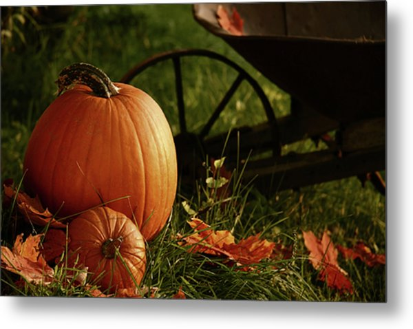 Pumpkins In The Grass Metal Print