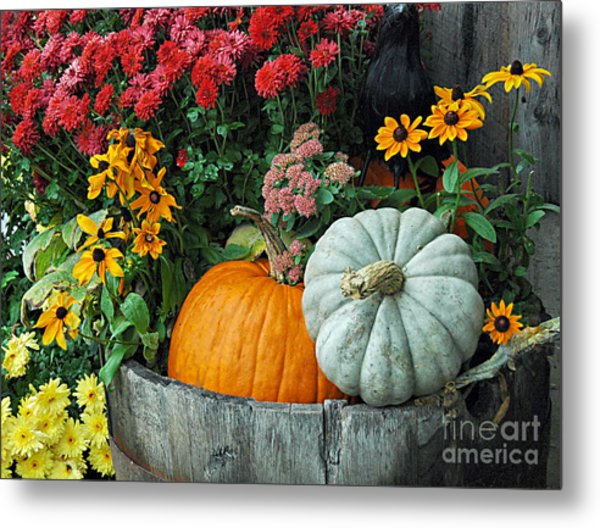 Pumpkins In Vermont Metal Print