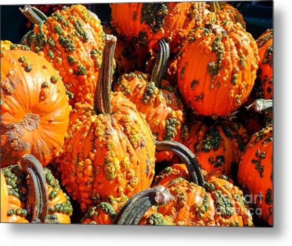 Pumpkins With Warts Metal Print