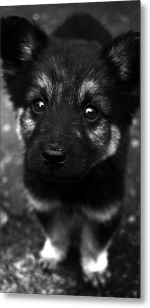 Pup Metal Print by Christopher Lugenbeal