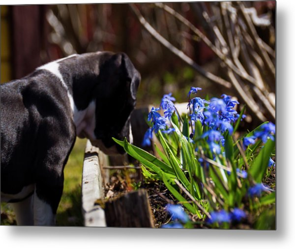 Puppy And Flowers Metal Print