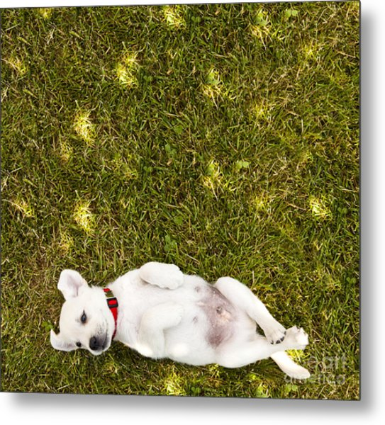 Puppy In The Grass Metal Print