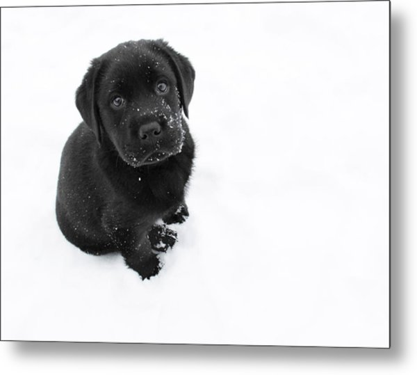 Puppy In The Snow Metal Print