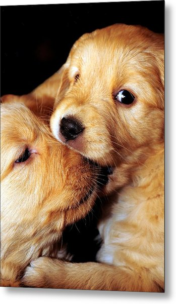 Puppy Love Metal Print