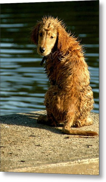Puppy On The Pier Metal Print