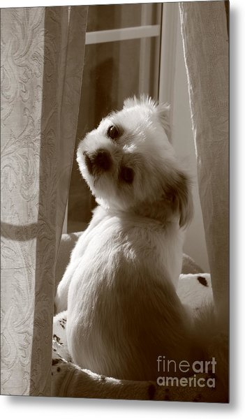 Puppy Pose Metal Print by Lynn Reid