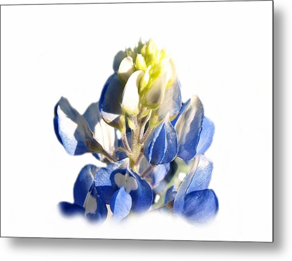 Pure Blue Bonnet Metal Print