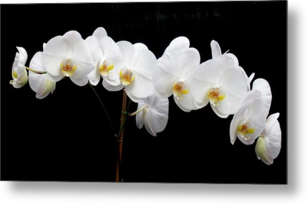 Pure Orchid Metal Print by Jeanette Oberholtzer