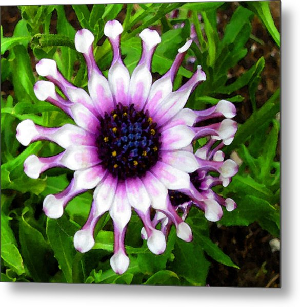 Purple And White Flowers 4  Wc  Metal Print