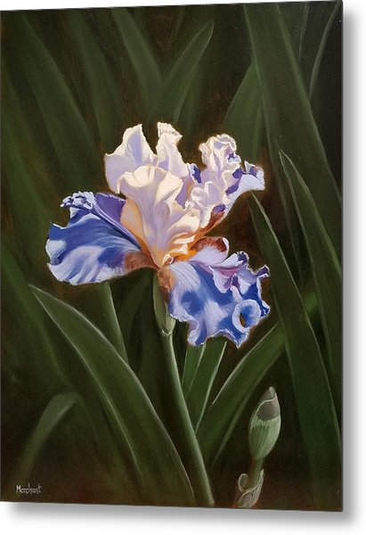 Purple And White Iris Metal Print