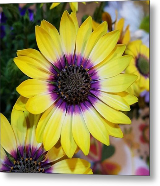 Purple And Yellow Daisy By Tammy Metal Print