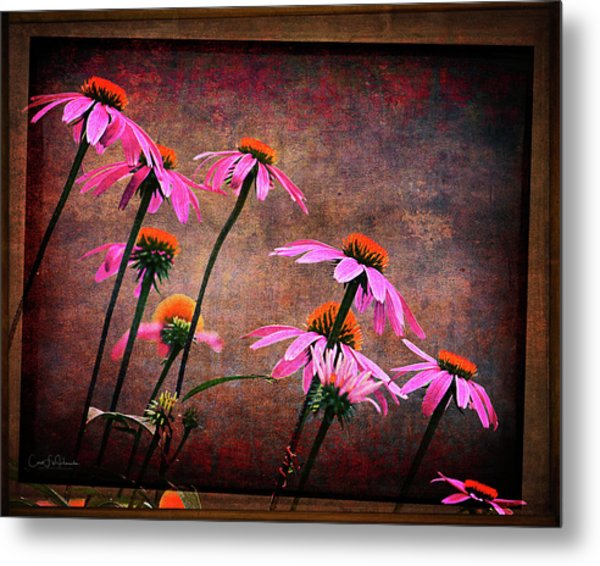 Purple Coneflowers Out Of Alignment  Metal Print