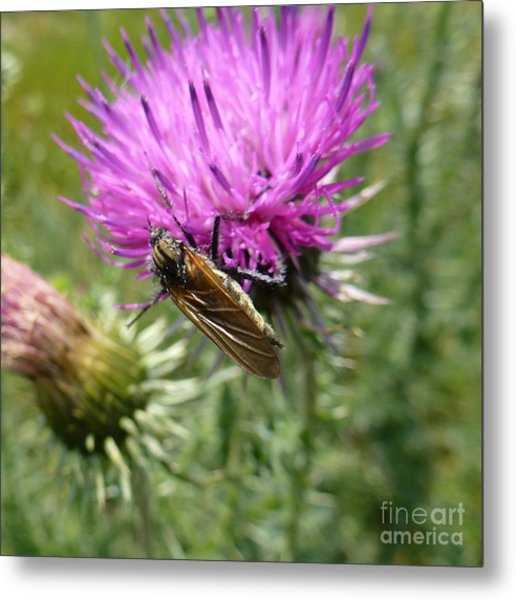 Purple Dandelions 1 Metal Print
