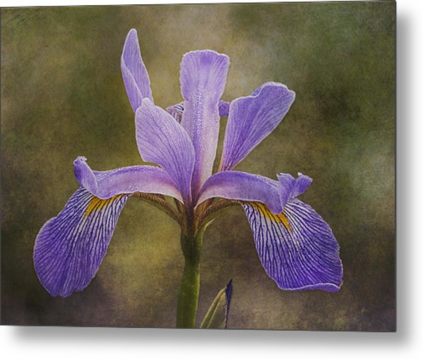 Metal Print featuring the photograph Purple Flag Iris by Patti Deters
