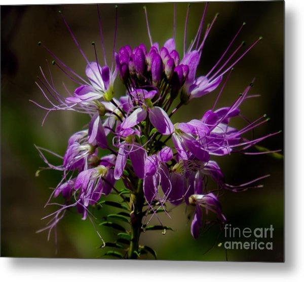 Purple Flower 1 Metal Print