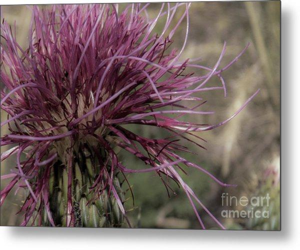Purple Flower 2 Metal Print